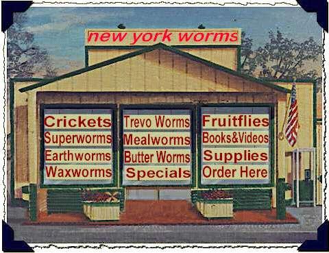 NY Worms